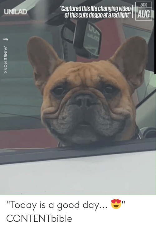 """captured: 2019  """"Captured this life changing video  of this cute doggo at ared light"""" 