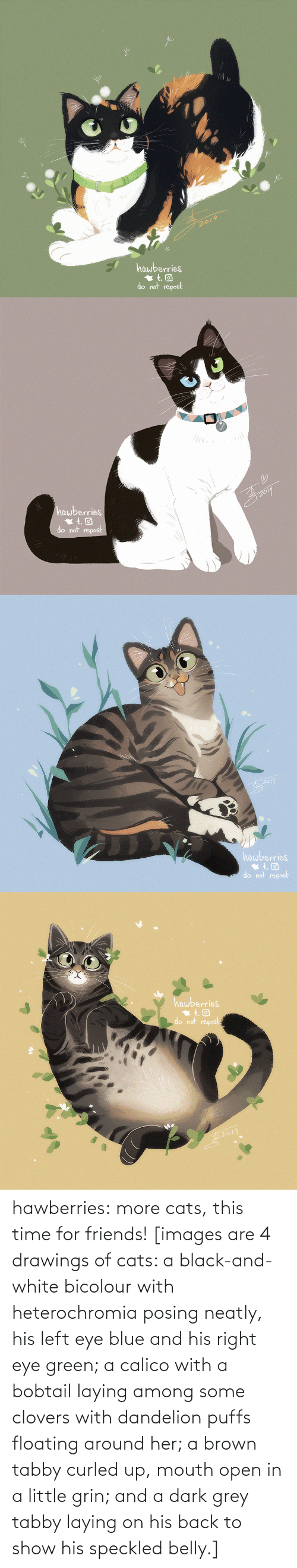 brown: 2019  hawberries  do not repost   hawberries  do not repost   hawberries  do not repost   hawberries  do not repost hawberries: more cats, this time for friends! [images are 4 drawings of cats: a black-and-white bicolour with heterochromia posing neatly, his left eye blue and his right eye green; a calico with a bobtail laying among some clovers with dandelion puffs floating around her; a brown tabby curled up, mouth open in a little grin; and a dark grey tabby laying on his back to show his speckled belly.]