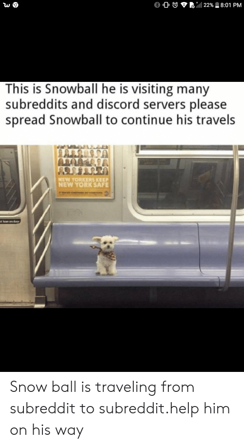 discord: 22% 8:01 PM  This is Snowball he is visiting many  subreddits and discord servers please  spread Snowball to continue his travels  NEW YORKERS KEEP  NEW YORK SAFE  tlan on door Snow ball is traveling from subreddit to subreddit.help him on his way