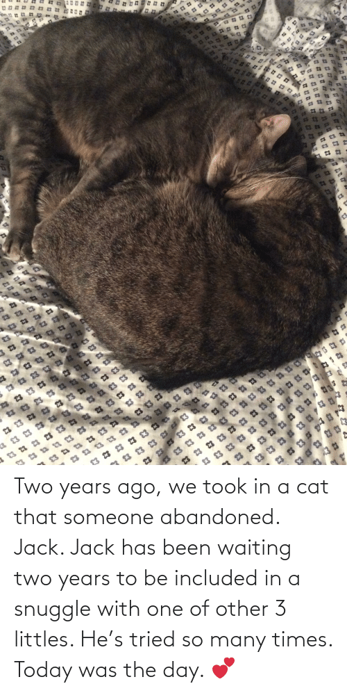 Littles: 23  23  $3  £3  $3 23  EH א  23  83  13  C3  3 23  23  23  23  23 3  E3 Two years ago, we took in a cat that someone abandoned. Jack. Jack has been waiting two years to be included in a snuggle with one of other 3 littles. He's tried so many times. Today was the day. 💕