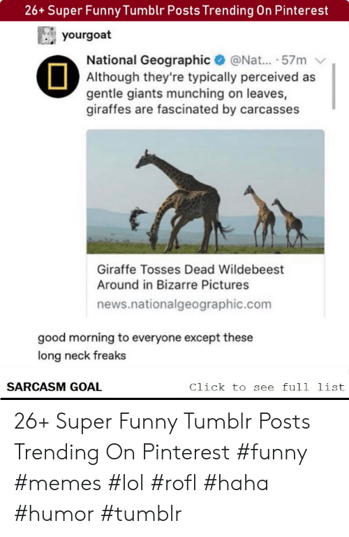 Bizarre: 26+ Super Funny Tumblr Posts Trending On Pinterest  yourgoat  National Geographic@Nat... .57m  Although they're typically perceived as  gentle giants munching on leaves,  giraffes are fascinated by carcasses  Giraffe Tosses Dead Wildebeest  Around in Bizarre Pictures  news.nationalgeographic.com  good morning to everyone except these  long neck freaks  SARCASM GOAL  Click to see full list 26+ Super Funny Tumblr Posts Trending On Pinterest #funny #memes #lol #rofl #haha #humor #tumblr