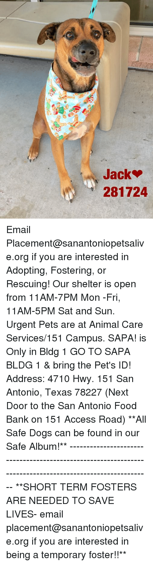 Dogs, Food, and Memes: 281724 Email Placement@sanantoniopetsalive.org if you are interested in Adopting, Fostering, or Rescuing!  Our shelter is open from 11AM-7PM Mon -Fri, 11AM-5PM Sat and Sun.  Urgent Pets are at Animal Care Services/151 Campus. SAPA! is Only in Bldg 1 GO TO SAPA BLDG 1 & bring the Pet's ID! Address: 4710 Hwy. 151 San Antonio, Texas 78227 (Next Door to the San Antonio Food Bank on 151 Access Road)  **All Safe Dogs can be found in our Safe Album!** ---------------------------------------------------------------------------------------------------------- **SHORT TERM FOSTERS ARE NEEDED TO SAVE LIVES- email placement@sanantoniopetsalive.org if you are interested in being a temporary foster!!**