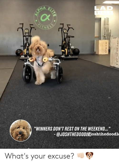"""Winners: 3  Cx  -1  """"WINNERS DON'T REST ON THE WEEKEND...  @JOSHTHEDO0DlEjoshthedoodle What's your excuse? 👊🏻🐶"""