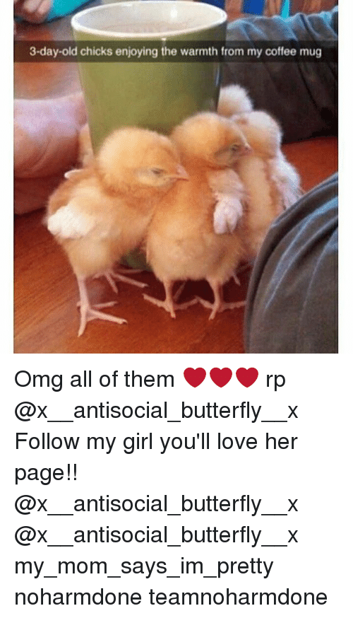 Warmthness: 3-day-old chicks enjoying the warmth from my coffee mug Omg all of them ❤❤❤ rp @x__antisocial_butterfly__x Follow my girl you'll love her page!! @x__antisocial_butterfly__x @x__antisocial_butterfly__x my_mom_says_im_pretty noharmdone teamnoharmdone