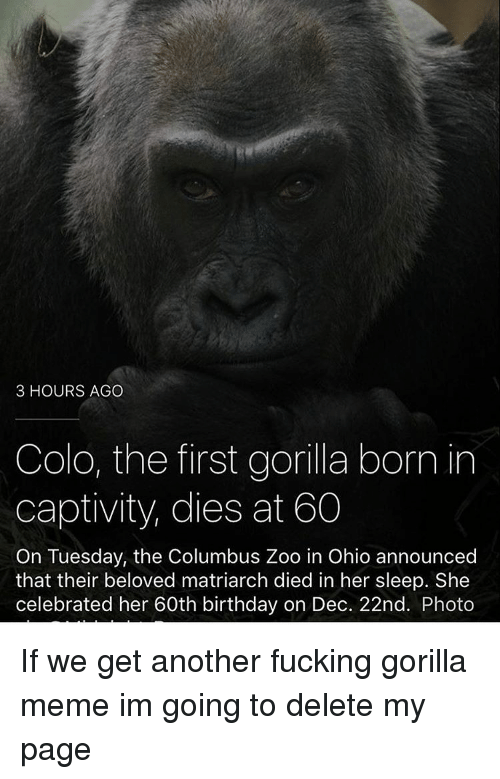 Gorilla Memes: 3 HOURS AGO  Colo, the first gorilla born in  captivity, dies at 60  On Tuesday, the Columbus Zoo in Ohio announced  that their beloved matriarch died in her sleep. She  celebrated her 60th birthday on Dec. 22nd. Photo If we get another fucking gorilla meme im going to delete my page