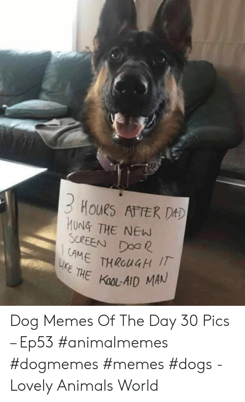 Kool Aid: 3 HouRs ATTER DAD  HUNG THE NEW  SCREEN DOG  AME THROUGH I  LIKE THE KOOL-AID MAN Dog Memes Of The Day 30 Pics – Ep53 #animalmemes #dogmemes #memes #dogs - Lovely Animals World