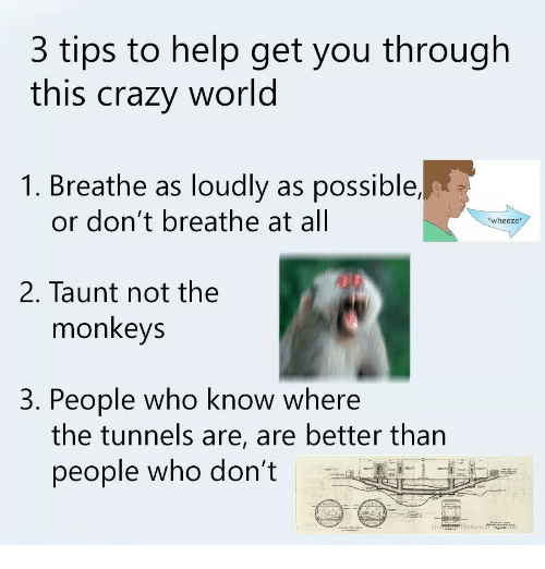 wheeze: 3 tips to help get you through  this crazy world  1. Breathe as loudly as possible,  or don't breathe at all  wheeze*  2. Taunt not the  monkeys  3. People who know where  the tunnels are, are better than  people who don't