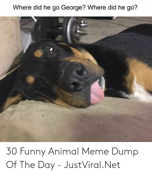 Animal Meme: 30 Funny Animal Meme Dump Of The Day - JustViral.Net
