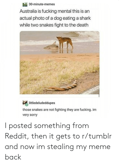 Shark: 30-minute-memes  Australia is fucking mental this is an  actual photo of a dog eating a shark  while two snakes fight to the death  littledeludeddupes  those snakes are not fighting they are fucking. im  very sorry I posted something from Reddit, then it gets to r/tumblr and now im stealing my meme back