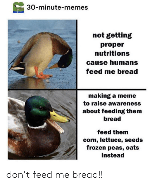 lettuce: 30-minute-memes  not getting  proper  nutritions  cause humans  feed me bread  making a meme  to raise awareness  about feeding them  bread  feed them  corn, lettuce, seeds  frozen peas, oats  instead don't feed me bread!!