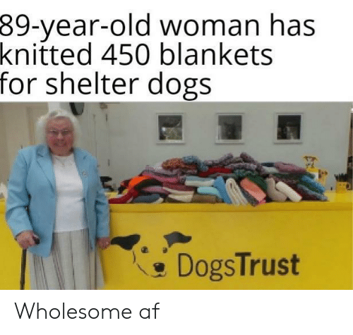 Old woman: 39-year-old woman has  knitted 450 blankets  for shelter dogs  DogsTrust Wholesome af
