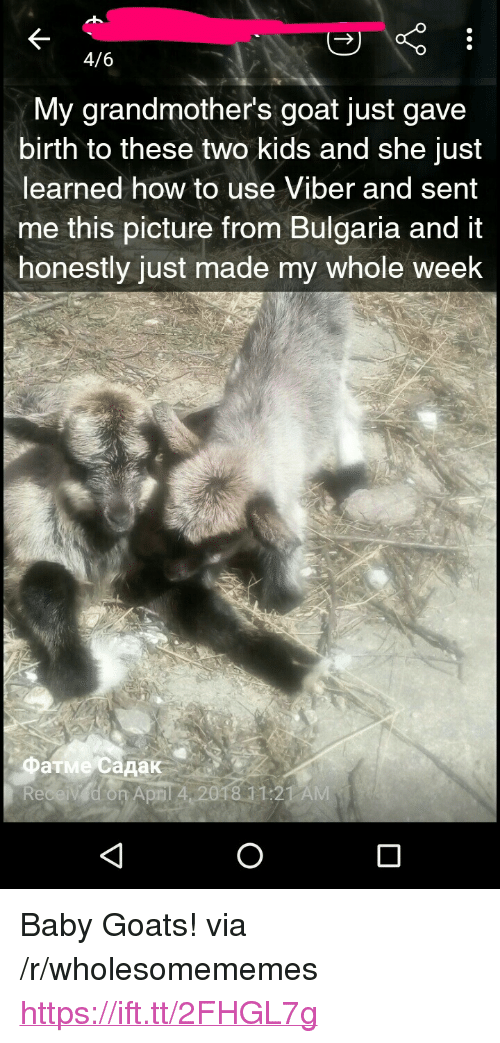 """Baby Goats: 4/6  My grandmother's goat just gave  birth to these two kids and she just  learned how to use Viber and sent  me this picture trom Bulgaria and it  honestly just made my whole week  Фатме садак  April 4 2018 11:21 AM <p>Baby Goats! via /r/wholesomememes <a href=""""https://ift.tt/2FHGL7g"""">https://ift.tt/2FHGL7g</a></p>"""