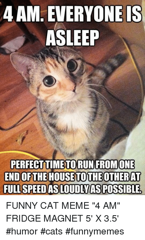 "funny cat: 4 AM. EVERYONEIS  ASLEEP  PERFECTTIMETORUN FROMONE  END OFTHE HOUSETOTHEOTHERAT  FULL SPEEDAS LOUDIYASPOSSIBLE FUNNY CAT MEME ""4 AM"" FRIDGE MAGNET 5' X 3.5' #humor #cats #funnymemes"