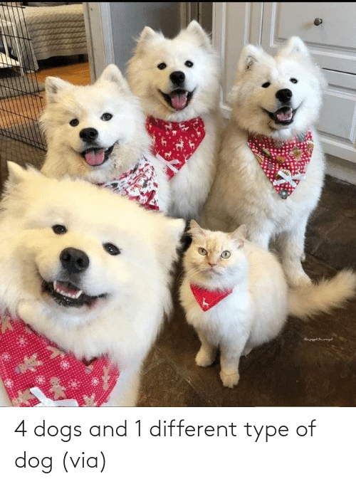 Dog: 4 dogs and 1 different type of dog (via)
