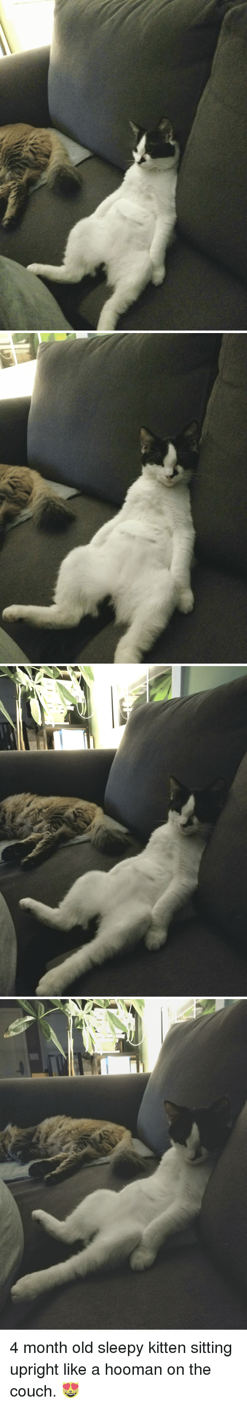 Couch, Old, and Cat: 4 month old sleepy kitten sitting upright like a hooman on the couch. 😻