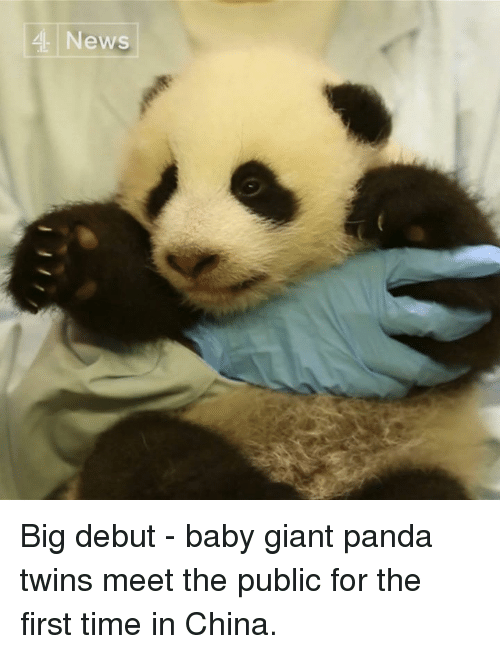 Memes, China, and Twins: 4 News Big debut - baby giant panda twins meet the public for the first time in China.