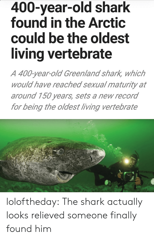 Relieved: 400-year-old shark  found in the Arctic  could be the oldest  living vertebrate  A 400-year-old Greenland shark, which  would have reached sexual maturity at  around 150 years, sets a new record  for being the oldest living vertebrate loloftheday:  The shark actually looks relieved someone finally found him