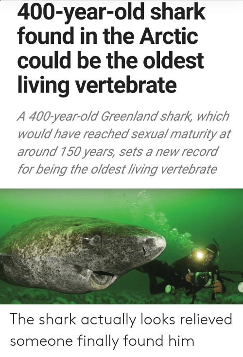 Relieved: 400-year-old shark  found in the Arctic  could be the oldest  living vertebrate  A 400-year-old Greenland shark, which  would have reached sexual maturity at  around 150 years, sets a new record  for being the oldest living vertebrate The shark actually looks relieved someone finally found him