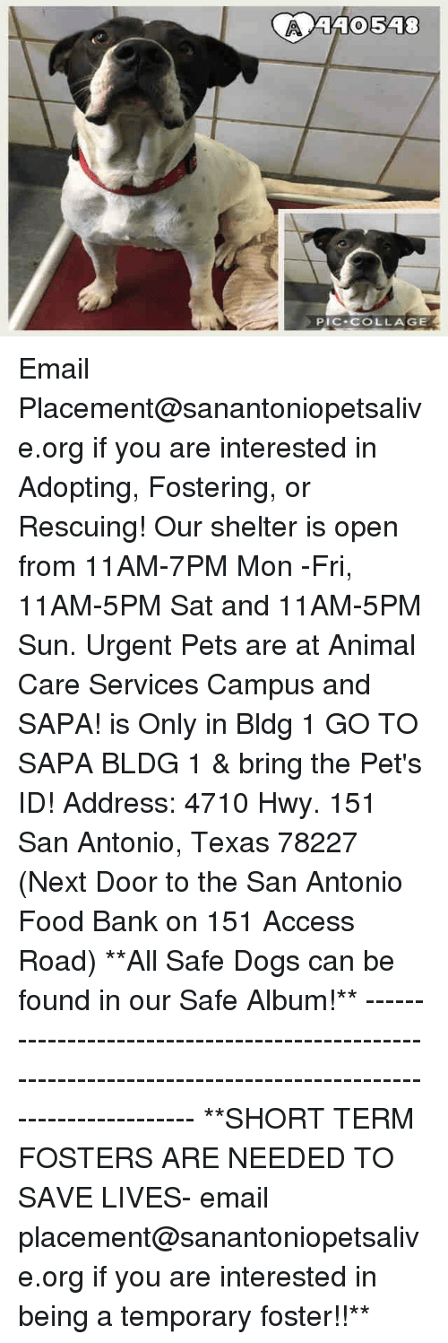 safe: 410548  PIC-COLLAGE Email Placement@sanantoniopetsalive.org if you are interested in Adopting, Fostering, or Rescuing!  Our shelter is open from 11AM-7PM Mon -Fri, 11AM-5PM Sat and 11AM-5PM Sun.  Urgent Pets are at Animal Care Services Campus and SAPA! is Only in Bldg 1 GO TO SAPA BLDG 1 & bring the Pet's ID! Address: 4710 Hwy. 151 San Antonio, Texas 78227 (Next Door to the San Antonio Food Bank on 151 Access Road)  **All Safe Dogs can be found in our Safe Album!** ---------------------------------------------------------------------------------------------------------- **SHORT TERM FOSTERS ARE NEEDED TO SAVE LIVES- email placement@sanantoniopetsalive.org if you are interested in being a temporary foster!!**
