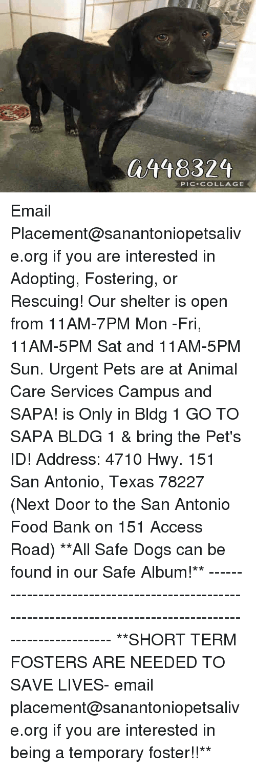 Dogs, Food, and Memes: 448324  PIC-COLLAGE Email Placement@sanantoniopetsalive.org if you are interested in Adopting, Fostering, or Rescuing!  Our shelter is open from 11AM-7PM Mon -Fri, 11AM-5PM Sat and 11AM-5PM Sun.  Urgent Pets are at Animal Care Services Campus and SAPA! is Only in Bldg 1 GO TO SAPA BLDG 1 & bring the Pet's ID! Address: 4710 Hwy. 151 San Antonio, Texas 78227 (Next Door to the San Antonio Food Bank on 151 Access Road)  **All Safe Dogs can be found in our Safe Album!** ---------------------------------------------------------------------------------------------------------- **SHORT TERM FOSTERS ARE NEEDED TO SAVE LIVES- email placement@sanantoniopetsalive.org if you are interested in being a temporary foster!!**