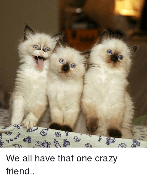 Funny Meme For Crazy Friend : Er be we all have that one crazy friend meme on
