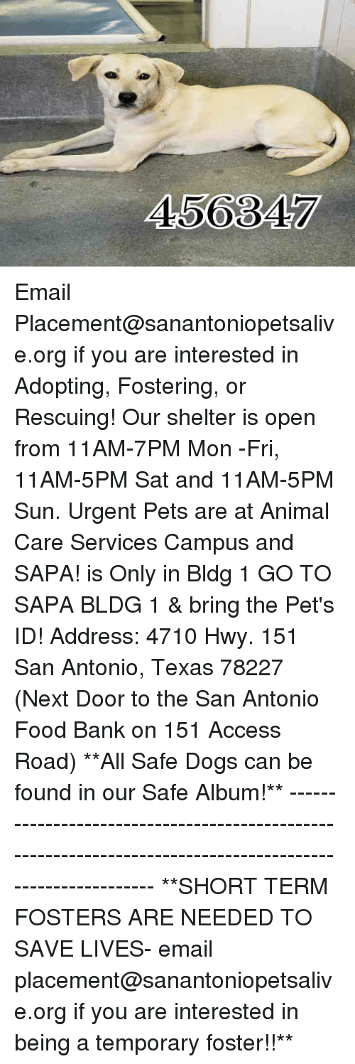 Dogs, Food, and Memes: 456347 Email Placement@sanantoniopetsalive.org if you are interested in Adopting, Fostering, or Rescuing!  Our shelter is open from 11AM-7PM Mon -Fri, 11AM-5PM Sat and 11AM-5PM Sun.  Urgent Pets are at Animal Care Services Campus and SAPA! is Only in Bldg 1 GO TO SAPA BLDG 1 & bring the Pet's ID! Address: 4710 Hwy. 151 San Antonio, Texas 78227 (Next Door to the San Antonio Food Bank on 151 Access Road)  **All Safe Dogs can be found in our Safe Album!** ---------------------------------------------------------------------------------------------------------- **SHORT TERM FOSTERS ARE NEEDED TO SAVE LIVES- email placement@sanantoniopetsalive.org if you are interested in being a temporary foster!!**