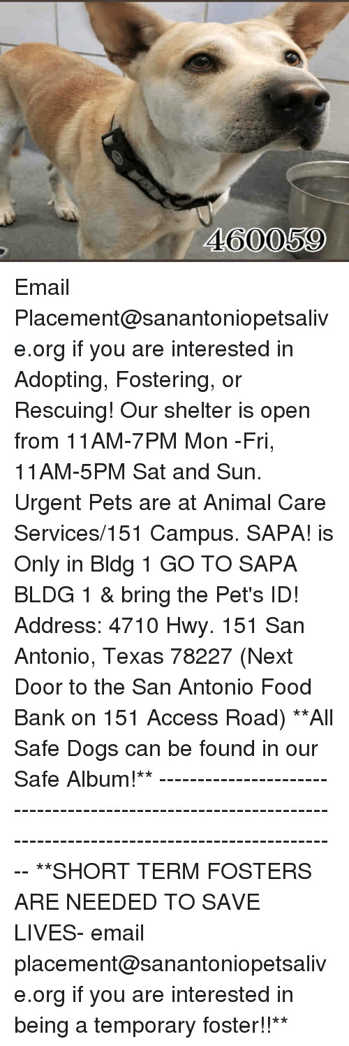 Dogs, Food, and Memes: 460059 Email Placement@sanantoniopetsalive.org if you are interested in Adopting, Fostering, or Rescuing!  Our shelter is open from 11AM-7PM Mon -Fri, 11AM-5PM Sat and Sun.  Urgent Pets are at Animal Care Services/151 Campus. SAPA! is Only in Bldg 1 GO TO SAPA BLDG 1 & bring the Pet's ID! Address: 4710 Hwy. 151 San Antonio, Texas 78227 (Next Door to the San Antonio Food Bank on 151 Access Road)  **All Safe Dogs can be found in our Safe Album!** ---------------------------------------------------------------------------------------------------------- **SHORT TERM FOSTERS ARE NEEDED TO SAVE LIVES- email placement@sanantoniopetsalive.org if you are interested in being a temporary foster!!**