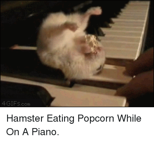 Popcorn: 4GIFS.com <p>Hamster Eating Popcorn While On A Piano.</p>
