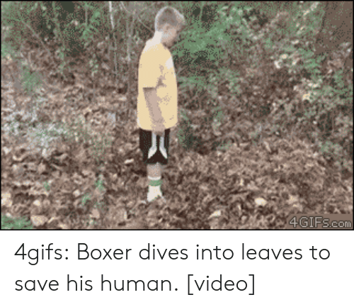 to html: 4GIFS.com 4gifs:  Boxer dives into leaves to save his human. [video]