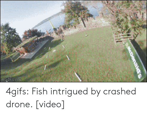 investigate: 4GIFs.com 4gifs:  Fish intrigued by crashed drone. [video]