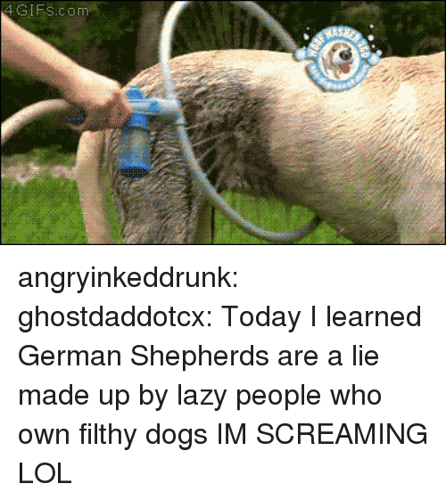 Lazy People: 4GIFs.com angryinkeddrunk: ghostdaddotcx:  Today I learned German Shepherds are a lie made up by lazy people who own filthy dogs  IM SCREAMING LOL