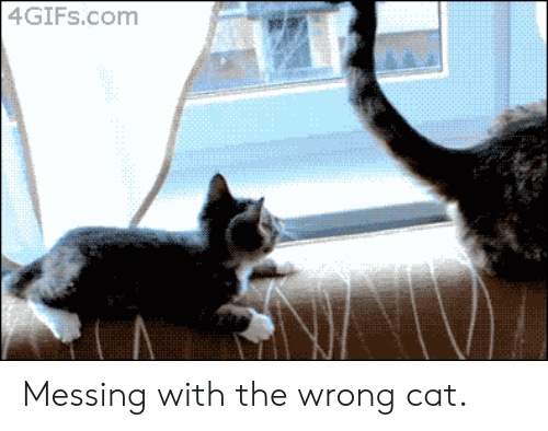 messing: 4GIFS.com Messing with the wrong cat.