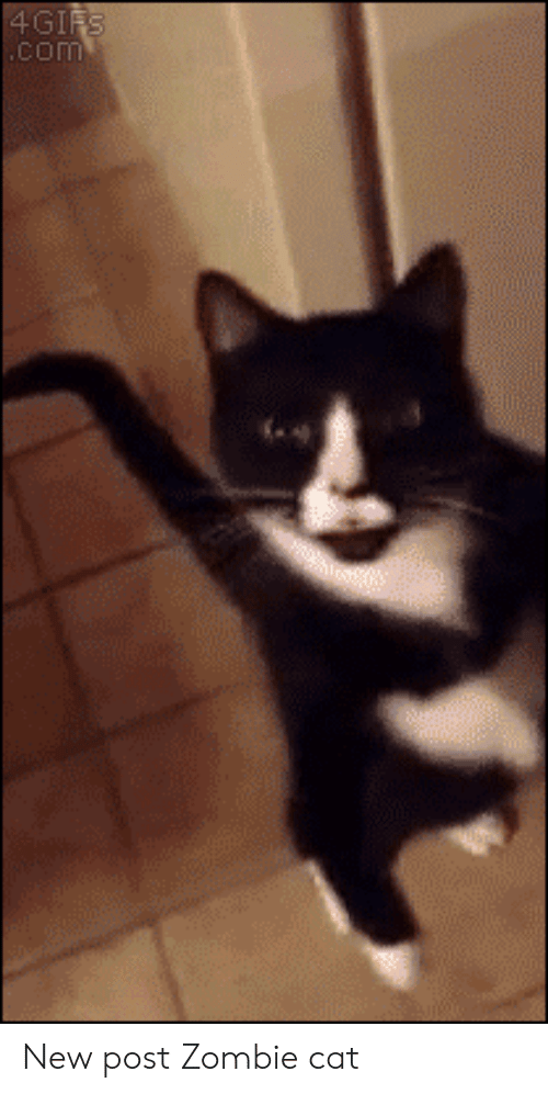 Zombie: 4GIFS  .com New post Zombie cat