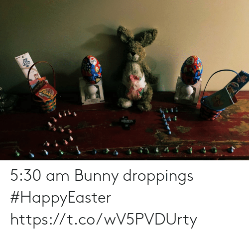 bunny: 5:30 am Bunny droppings #HappyEaster https://t.co/wV5PVDUrty
