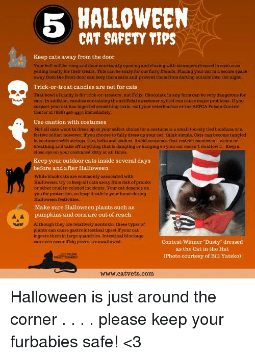 5 HALLOWEEN CAT SAFETY TIPS Keep Cats Away From the Door ...