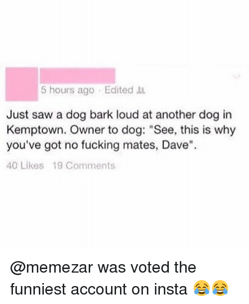 "Sawing: 5 hours ago Edited  Just saw a dog bark loud at another dog in  Kemptown. Owner to dog: ""See, this is why  you've got no fucking mates, Dave""  40 Likes 19 Comments @memezar was voted the funniest account on insta 😂😂"