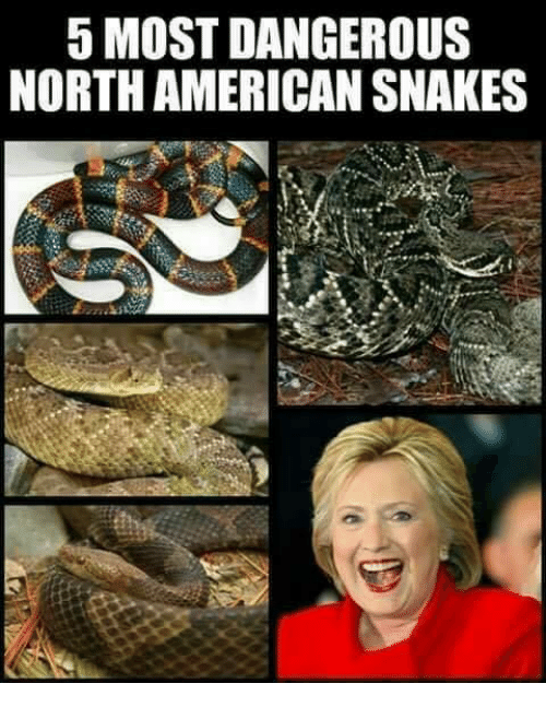 American, Snakes, and Dangerous: 5 MOST DANGEROUS  NORTH AMERICAN SNAKES