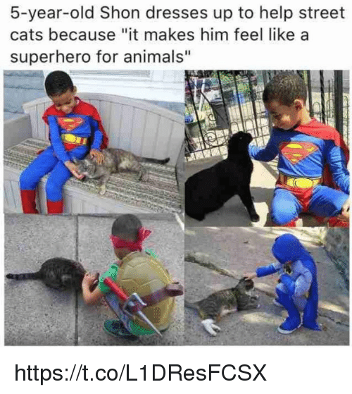 "Animals, Cats, and Memes: 5-year-old Shon dresses up to help street  cats because ""it makes him feel like a  superhero for animals"" https://t.co/L1DResFCSX"