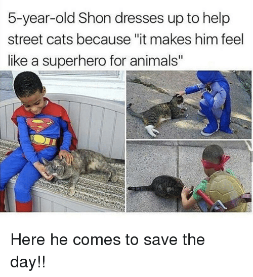 """save-the-day: 5-year-old Shon dresses up to help  street cats because """"it makes him feel  like a superhero for animals"""" <p>Here he comes to save the day!!</p>"""
