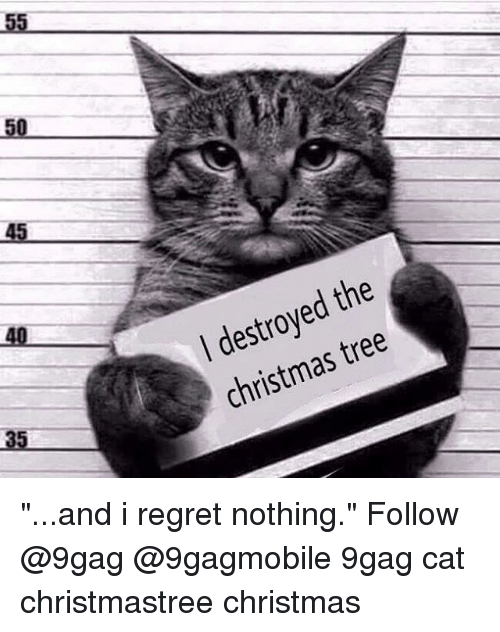 "memes: 50  45  the  tree  christmas ""...and i regret nothing."" Follow @9gag @9gagmobile 9gag cat christmastree christmas"