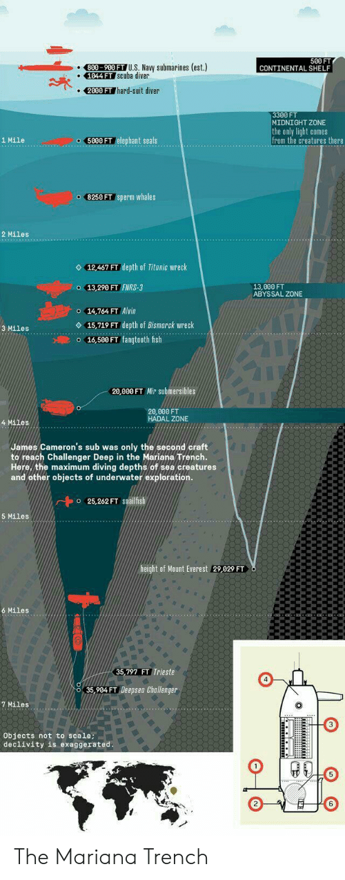 Ffffffffff: 500 FT  CONTINENTAL SHELF  800-900 FT U.S. Navy submarines (est.)  1044 FT Scuba diver  2000 FT hard-suit diver  3300 FT  MIDNIGHT ZONE  the only light comes  from the creatures there  5000 FT elephant seals  1 Mile  o 8250 FT sperm whales  2 Miles  12,467 FT depth of Titanic wreck  o 13,290 FT FNRS-3  13.000 FT  ABYSSAL ZONE  o 14,764 FT Alvin  15,719 FT depth of Bismarck wreck  o 16,500 FT fangtooth fish  3 Miles  20,000 FT Mir submersibles  20,000 FT  HADAL ZONE  4 Miles  James Cameron's sub was only the second craft  to reach Challenger Deep in the Mariana Trench.  Here, the maximum diving depths of sea creatures  and other objects of underwater exploration.  o 25,262 FT snailfish  5 Miles  height of Mount Everest 29,029 FT  6 Miles  35,797 FT Trieste  35,904 FT Deepsea Challenger  7 Miles  Objects not to scale;  declivity is exaggerated.  FFFFFFFFFF The Mariana Trench