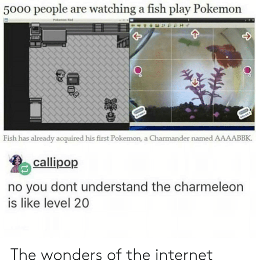 charmeleon: 5000 people are watching a fish play Pokemon  Fish has already acquired his first Pokemon, a Charmander named AAAABBK.  callipop  no you dont understand the charmeleon  is like level 20 The wonders of the internet