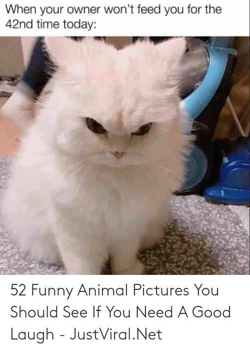 Pictures: 52 Funny Animal Pictures You Should See If You Need A Good Laugh - JustViral.Net