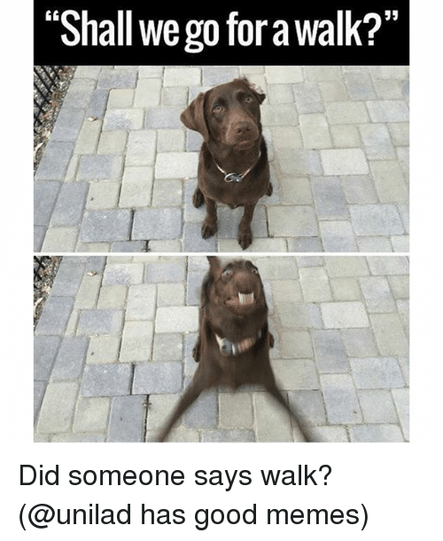 "Funny, Memes, and Good: 53  ""Shall we go for a walk?""  0 Did someone says walk? (@unilad has good memes)"