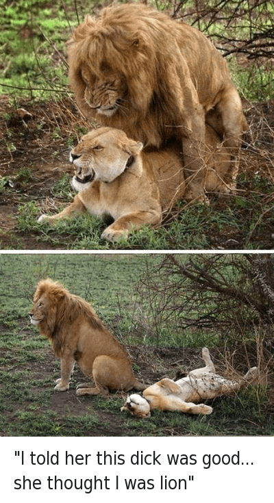 "puns: ""I told her this dick was good... she thought I was lion"" ""I told her this dick was good... she thought I was lion"""