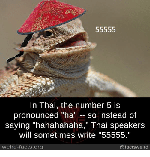 """Facts, Memes, and Weird: 55555  In Thai, the number 5 is  pronounced """"ha  so instead of  saying """"hahahahaha,"""" Thai speakers  will sometimes write """"55555.""""  weird-facts.org  @facts weird"""