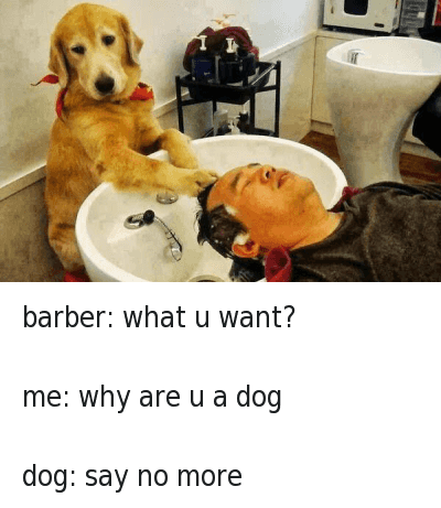 Say No More: barber: what u want?  me: why are u a dog  dog: say no more barber: what u want?-me: why are u a dog-dog: say no more
