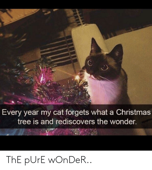 Christmas Tree: 6  Every year my cat forgets what a Christmas  tree is and rediscovers the wonder. ThE pUrE wOnDeR..