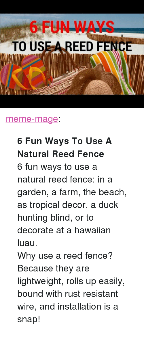 "meme: 6 FUN WAYS  TO USE A REED FENCE <p><a class=""tumblr_blog"" href=""http://meme-mage.tumblr.com/post/143239514688"">meme-mage</a>:</p> <blockquote> <p><b>  6 Fun Ways To Use A Natural Reed Fence  </b><br/></p> <p>  6 fun ways to use a natural reed fence: in a garden, a farm, the beach, as tropical decor, a duck hunting blind, or to decorate at a hawaiian luau.<br/>Why use a reed fence? Because they are lightweight, rolls up easily, bound with rust resistant wire, and installation is a snap!  <br/></p> </blockquote>"