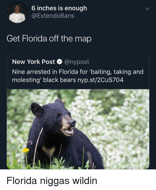 Baiting: 6 inches is enough  @ExtendoBans  Get Florida off the map  New York Post @nypost  Nine arrested in Florida for 'baiting, taking and  molesting' black bears nyp.st/2CuS704 Florida niggas wildin